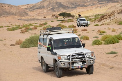 Marsa Alam Safari Excursions